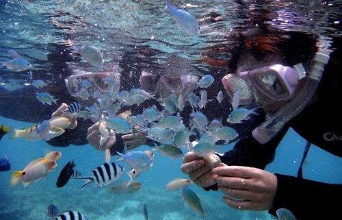 熱帯魚の餌付け