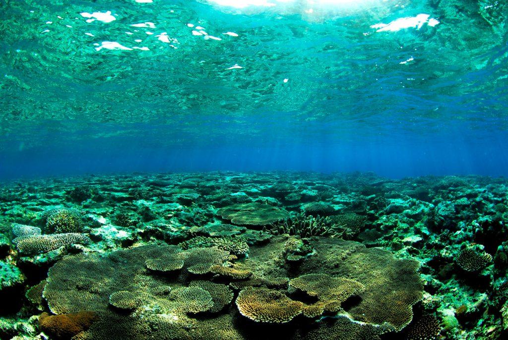 アーラ浜沖のサンゴ