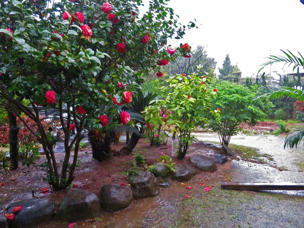 大雨の庭①