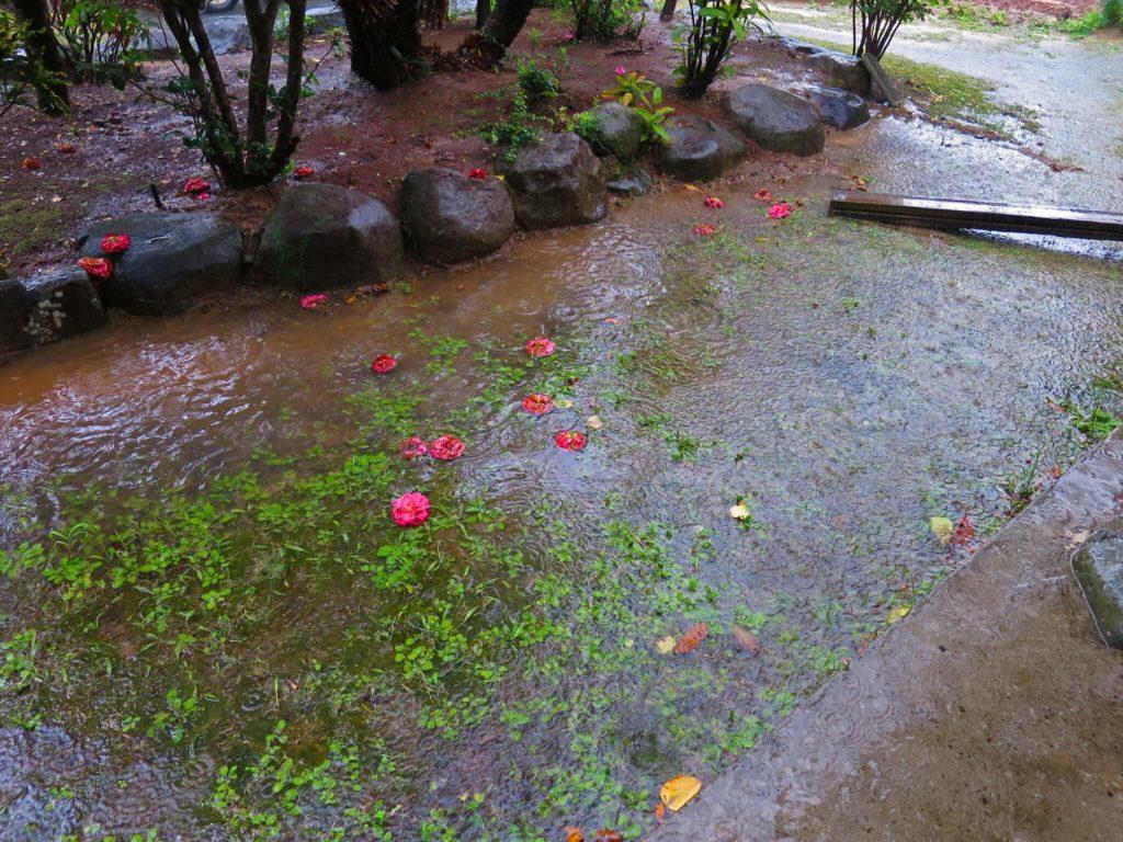 大雨の庭②