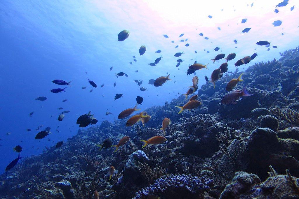 ドロップオフポイントに群れる魚たち