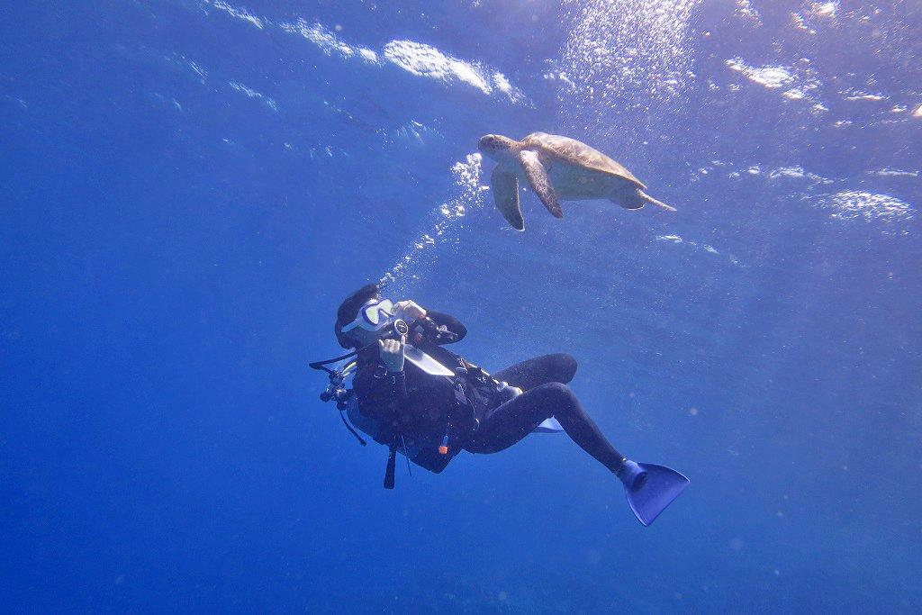 ウミガメとたわむれるダイバー