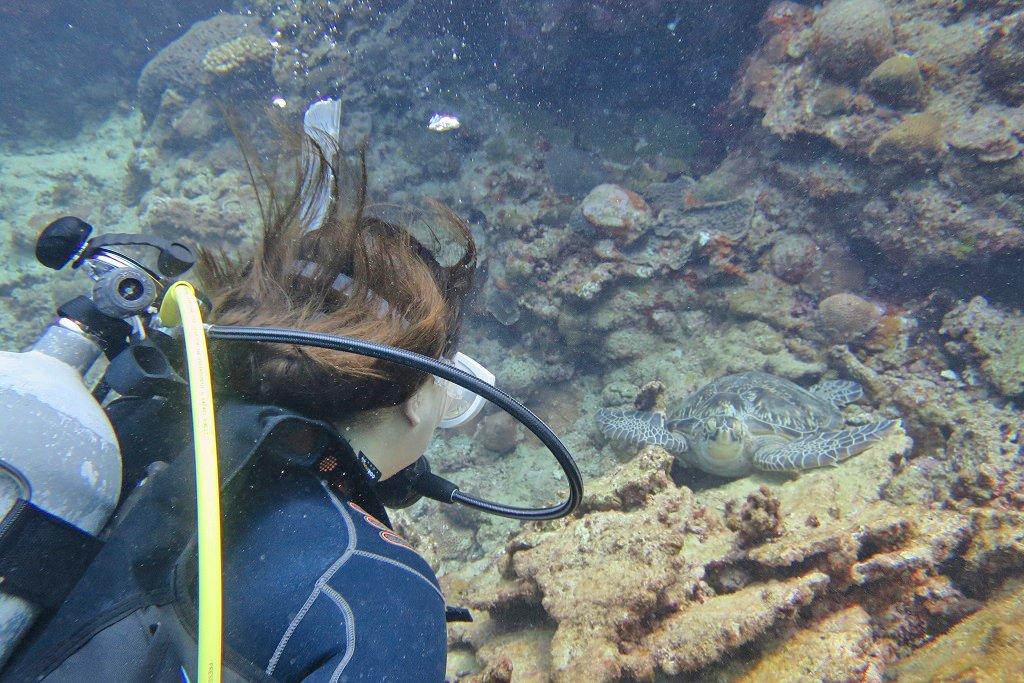 ウミガメ 体験ダイバー目線