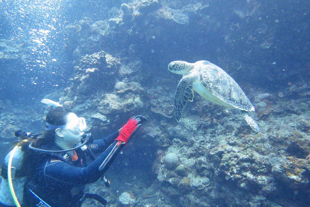 ウミガメ 泳ぎ始め