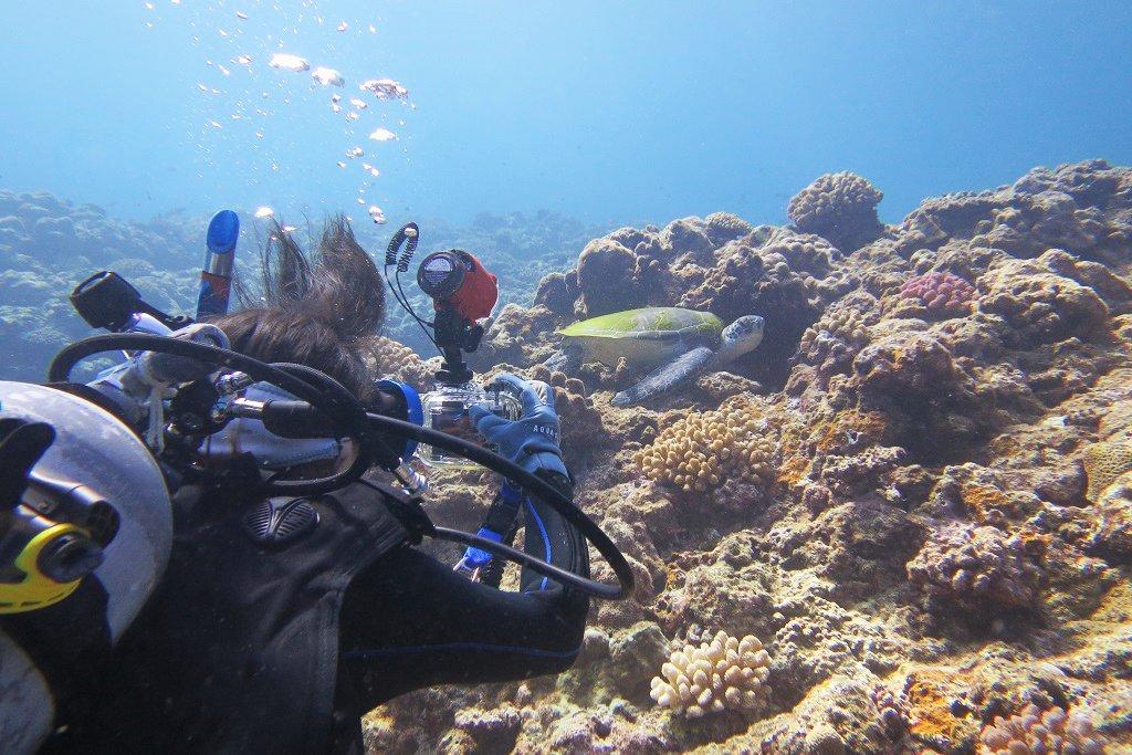 ウミガメをじっくり撮影