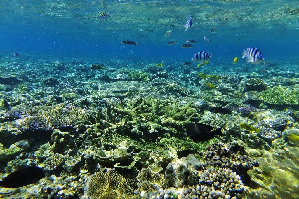 美しいサンゴの群生