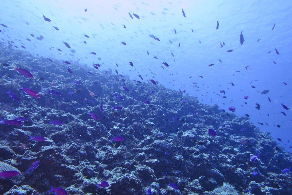 ドロップオフに群れる魚たち