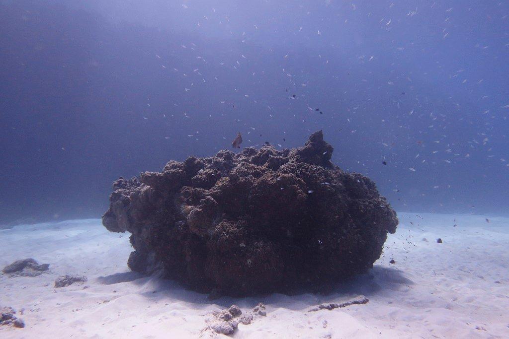 サンゴの根を逆光で撮る