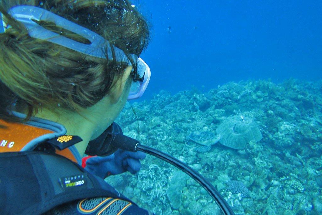 ウミガメ発見