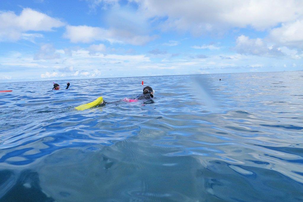 水面に顔を出すウミガメ