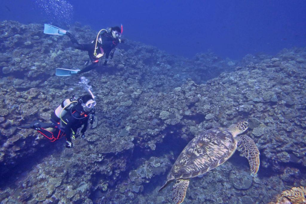 のんびりウミガメ