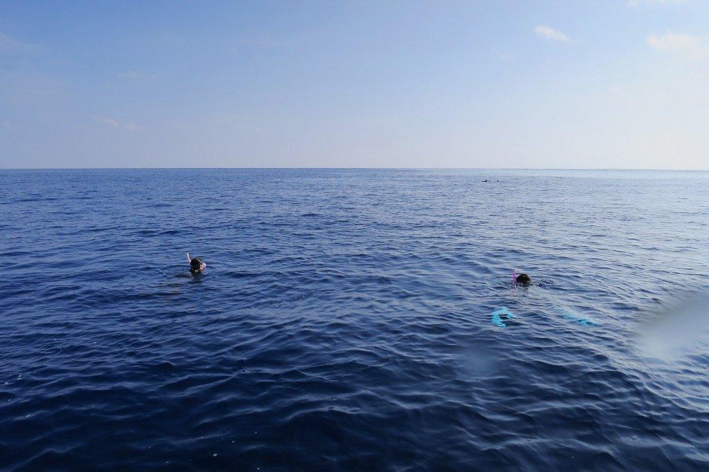 イルカとスノーケリング
