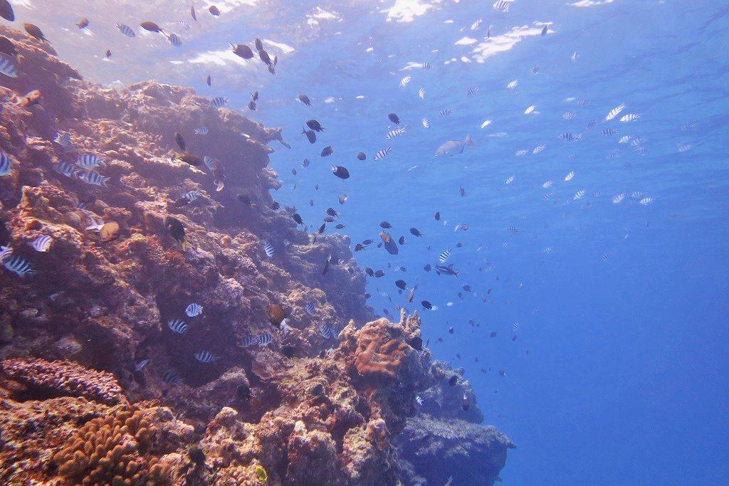 群れる魚たち
