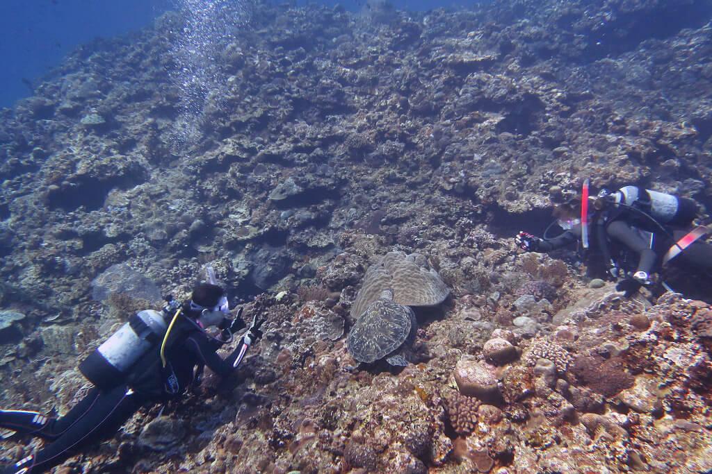 アオウミガメと記念撮影