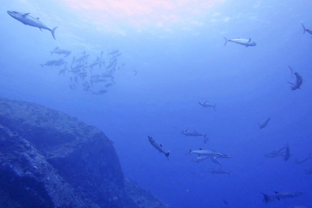 魚が入り乱れるトンバラ