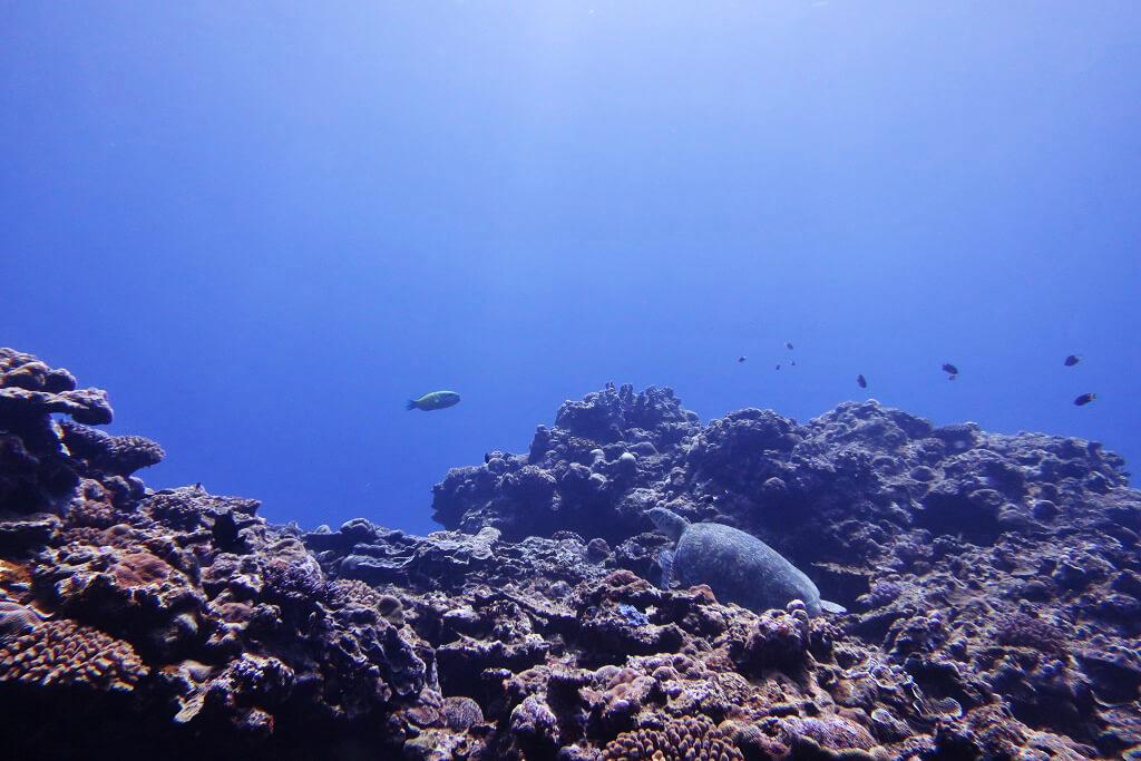 体験ダイビングでウミガメ