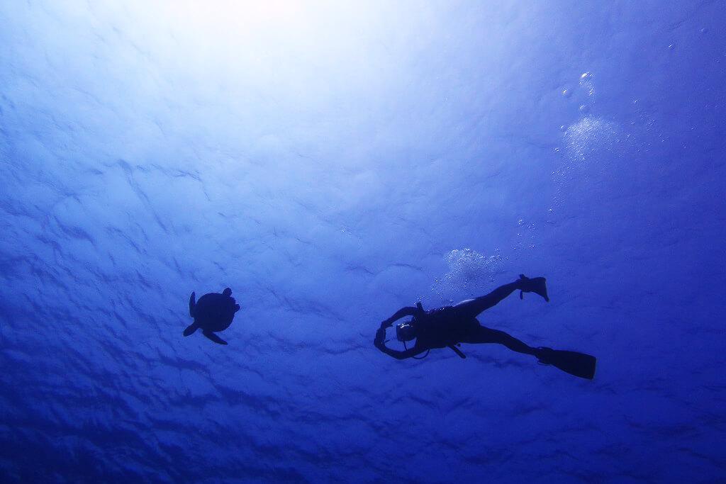 ゲストさんとウミガメ