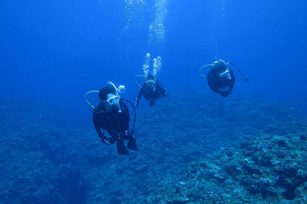 ダイビングのゲスト