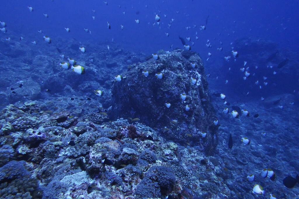 トンバラのブルーの海