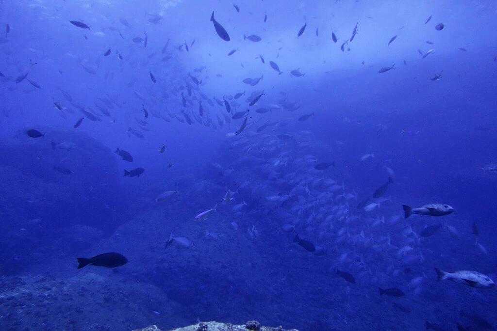 トンバラに集まる魚たち