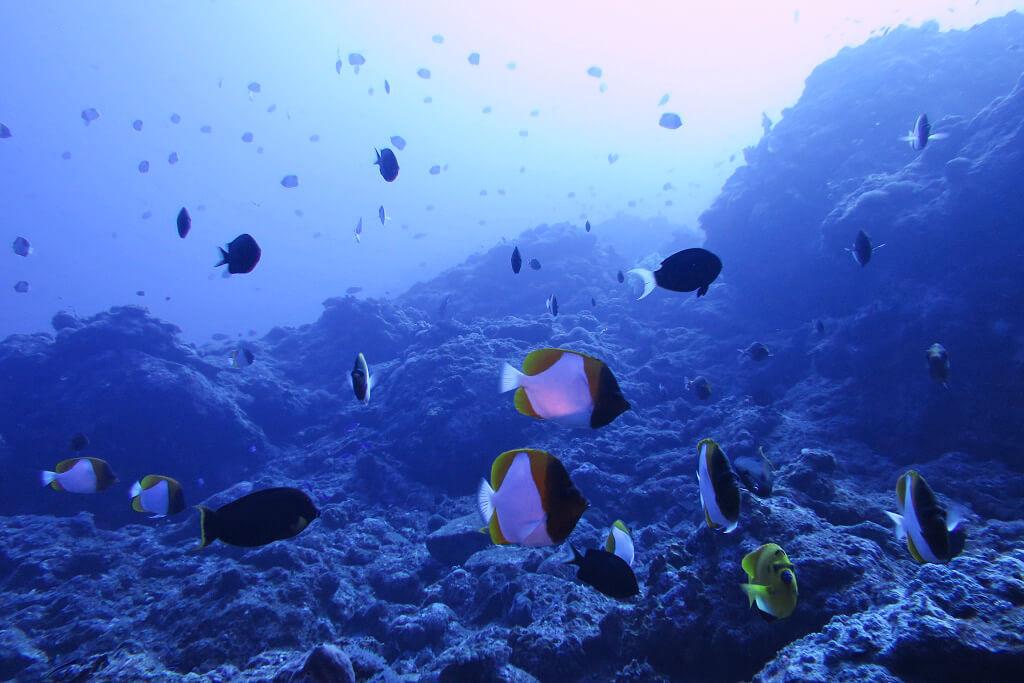 トンバラの水深40m
