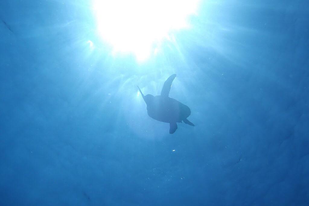太陽とアオウミガメ