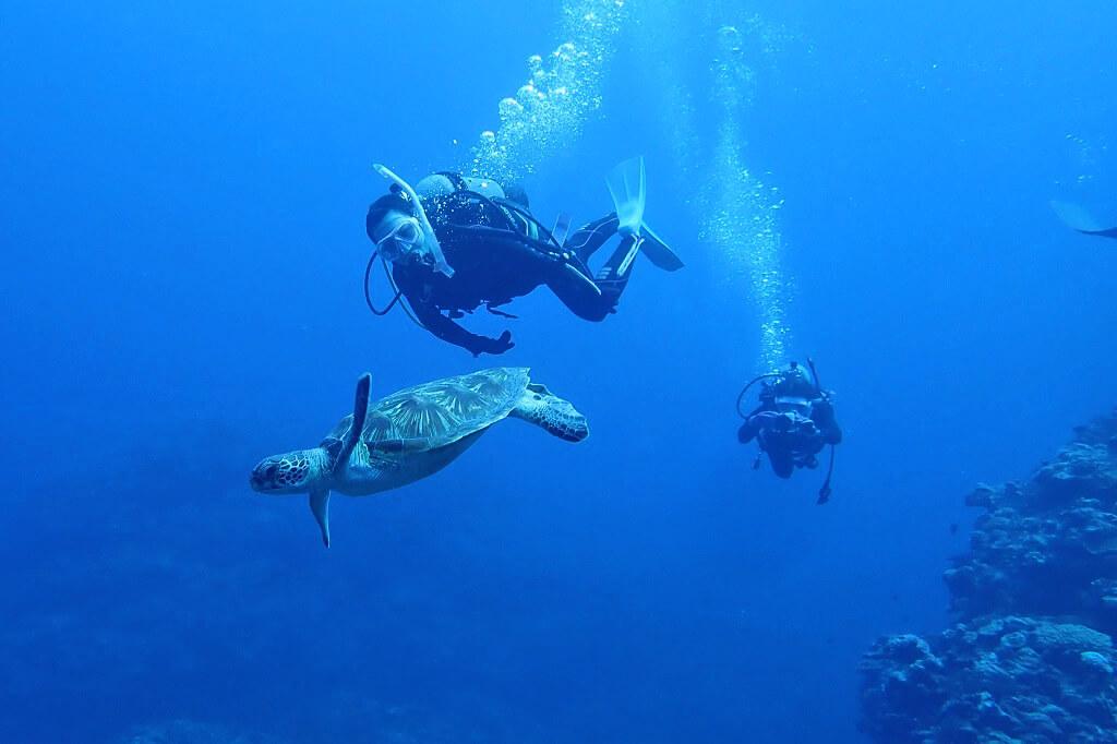ウミガメと一緒に