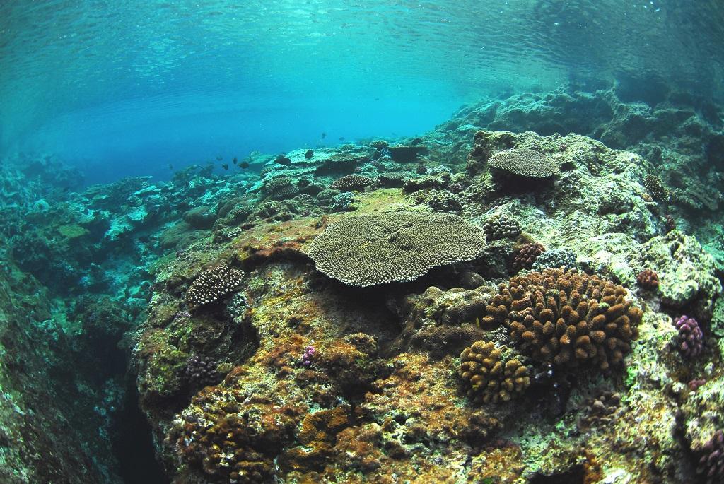 浅瀬のサンゴ