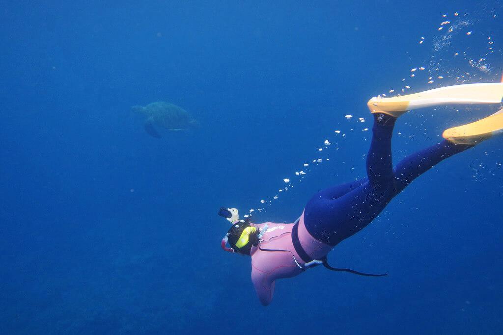 ウミガメとスキンダイビング