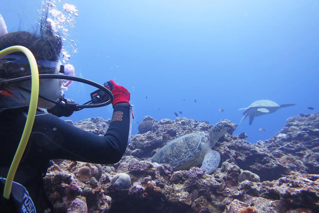 カメ三昧の体験ダイビング