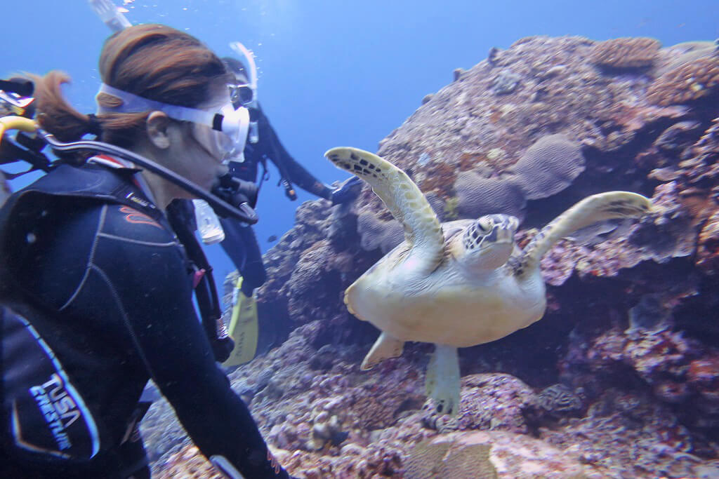 アオウミガメと遭遇