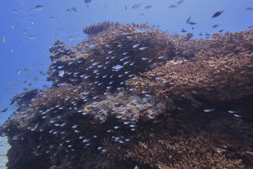 サンゴの根