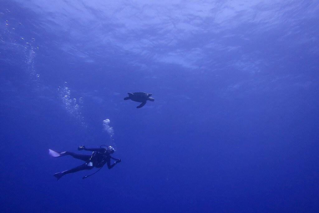外海ポイントでウミガメ
