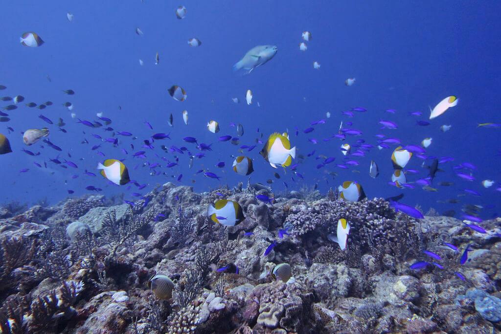 ウーマガイの魚たち