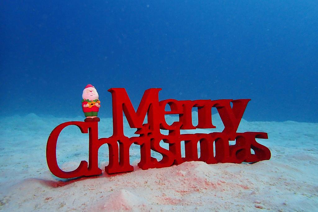 海の中のメリークリスマス