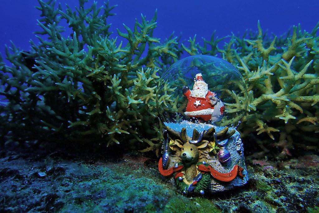 サンゴの森のサンタクロース