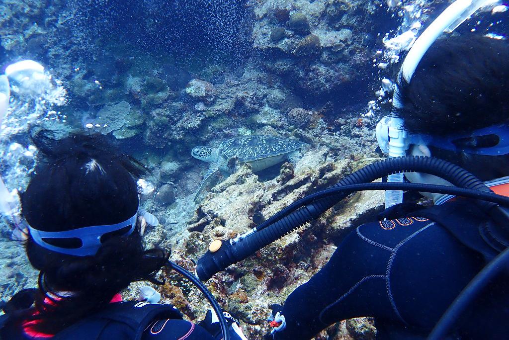 体験ダイバーとウミガメ