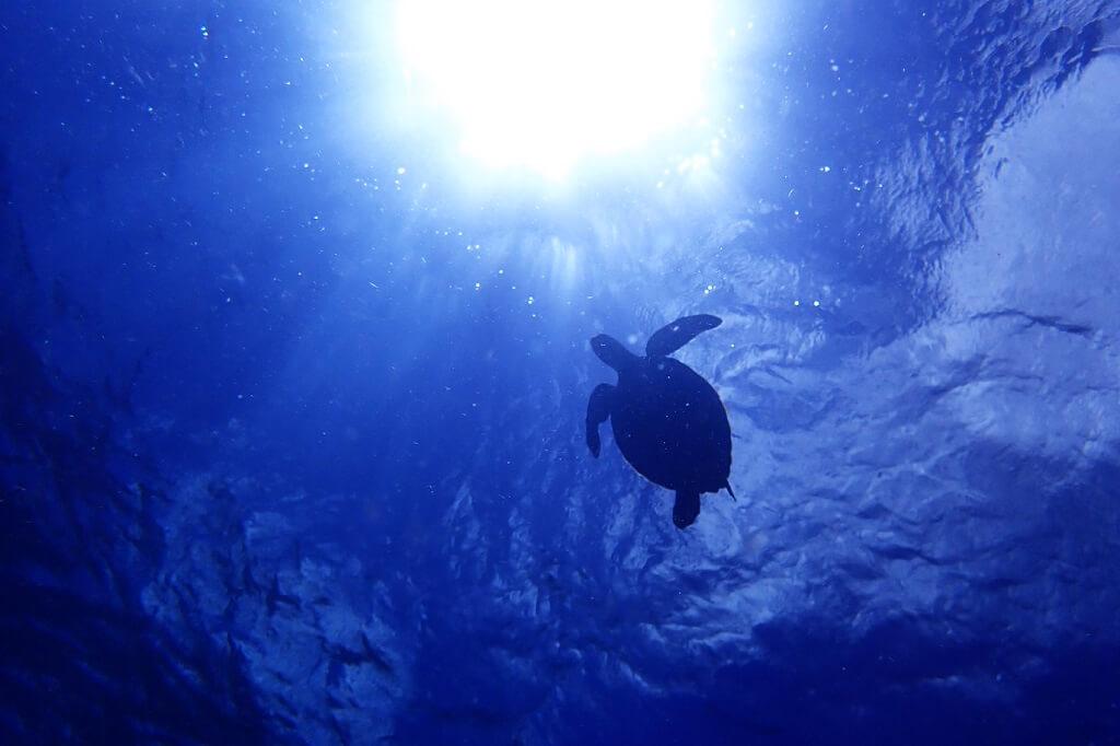 アオウミガメと太陽