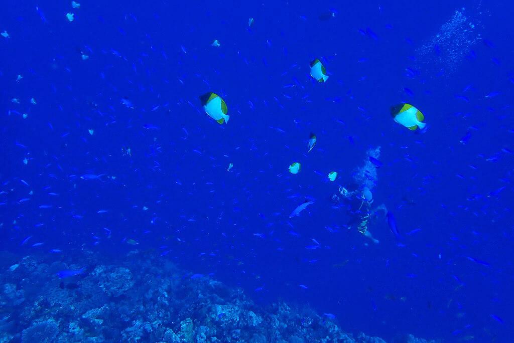 ドロップオフの海