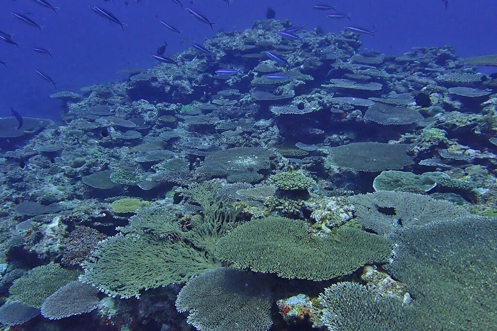 密なサンゴ