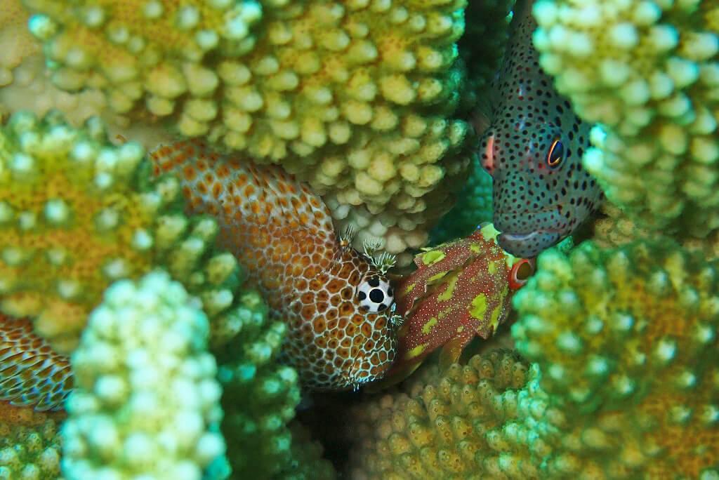 サンゴ隙間に密
