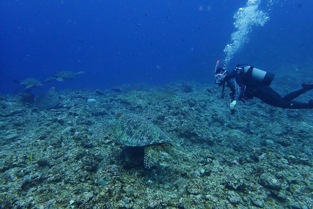 ウミガメとダイビング