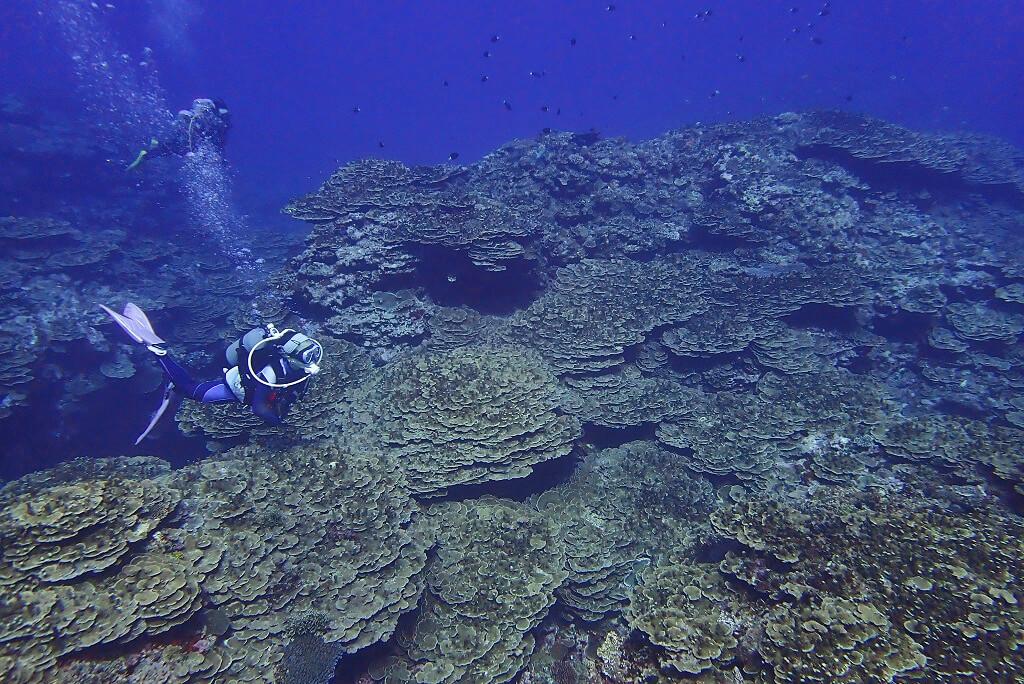 サンゴの森を探検