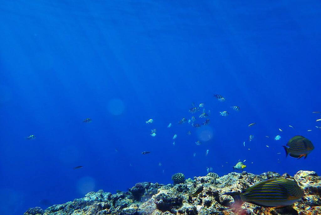 晴れた時の水中世界