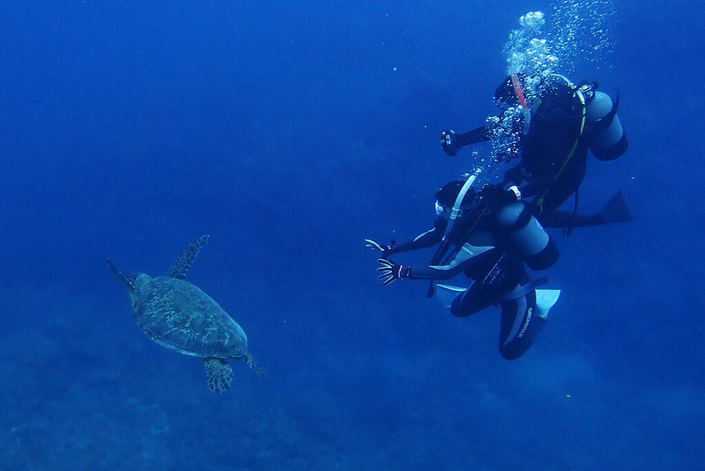 ウミガメに接近