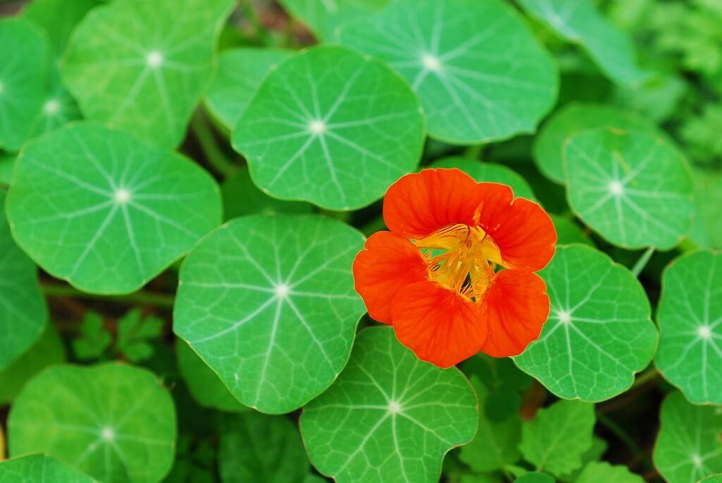 島に咲く花