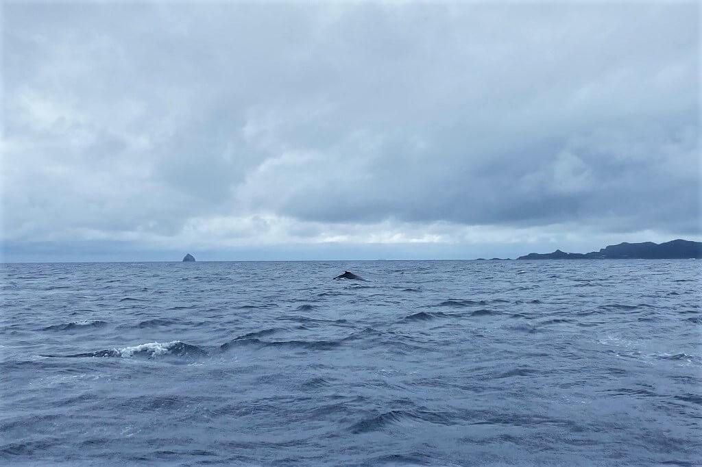 船上からクジラ