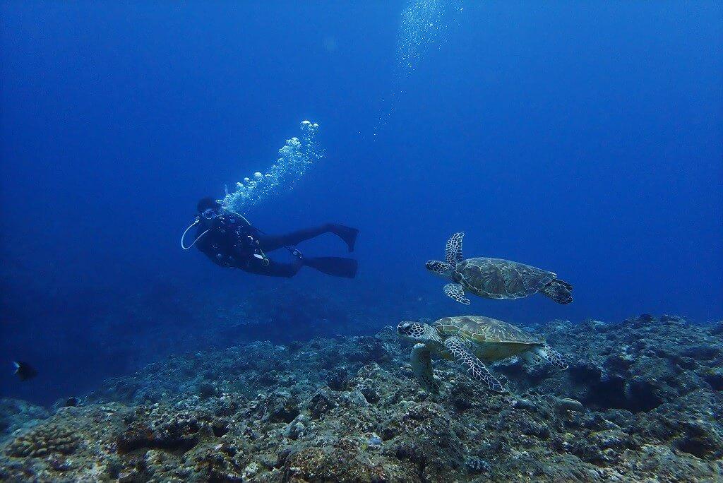 2匹の子アオウミガメ