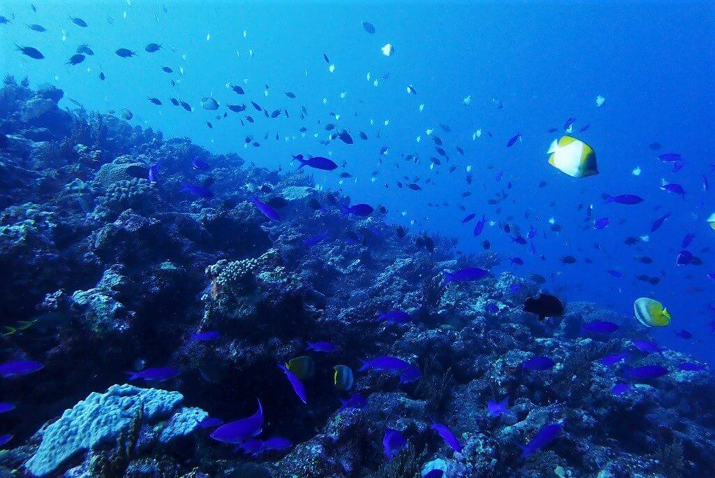 ウーマガイの魚影