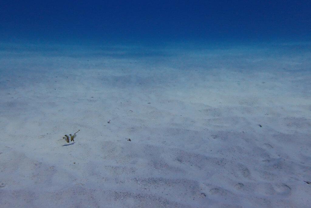 ブルーの砂地